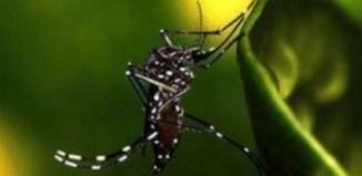 Ανησυχία ΙΣΑ για την εμφάνιση κρουσμάτων του ιού του Δυτικού Νείλου