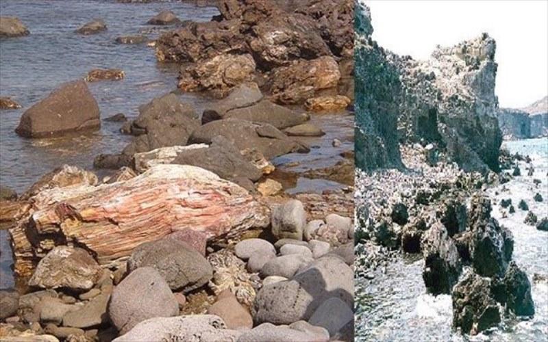 Νησιώπη: ξενάγηση στα υποθαλάσσια απολιθώματα