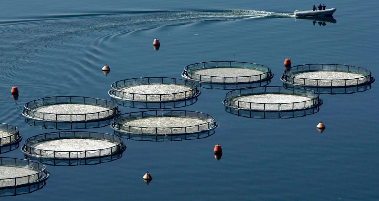 Χρηματοδοτήσεις στα Μέτρα της Αλιείας, Υδατοκαλλιέργειας, Μεταποίησης και Εμπορίας αλιευτικών προϊόντων