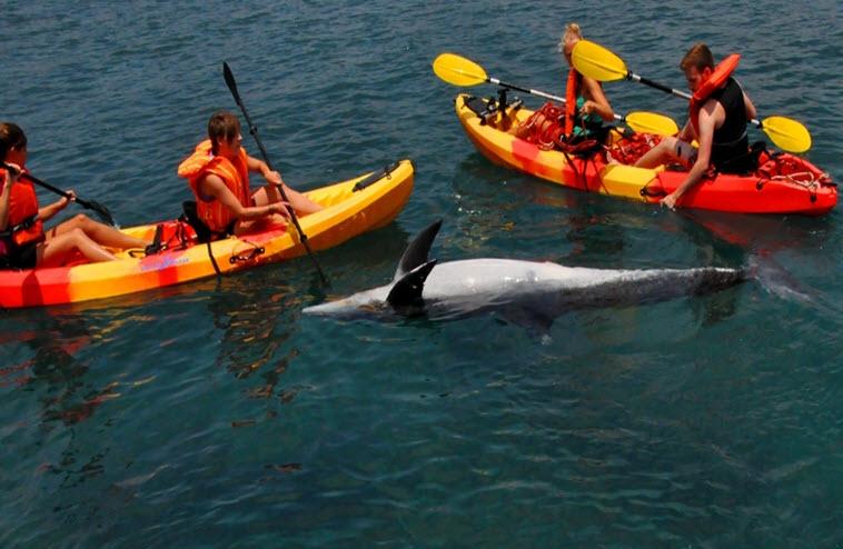 Ακόμα ένα σοκαριστικό περιστατικό εκβρασμού δελφινιού