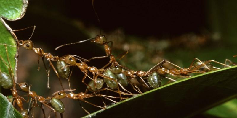 Μπορούν τα μυρμήγκια να σταματήσουν την κλιματική αλλαγή;