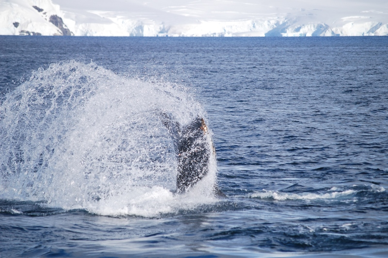 Ανταρκτική: Ανακάλυψη θαλάσσιας ζωής κάτω από 750 μέτρα πάγου