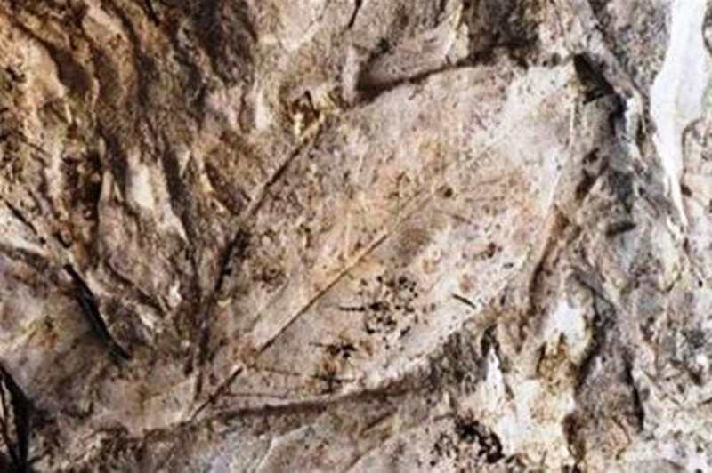 Μυτιλήνη: Υπαίθριο μουσείο φυσικής ιστορίας το νέο απολιθωμένο δάσος