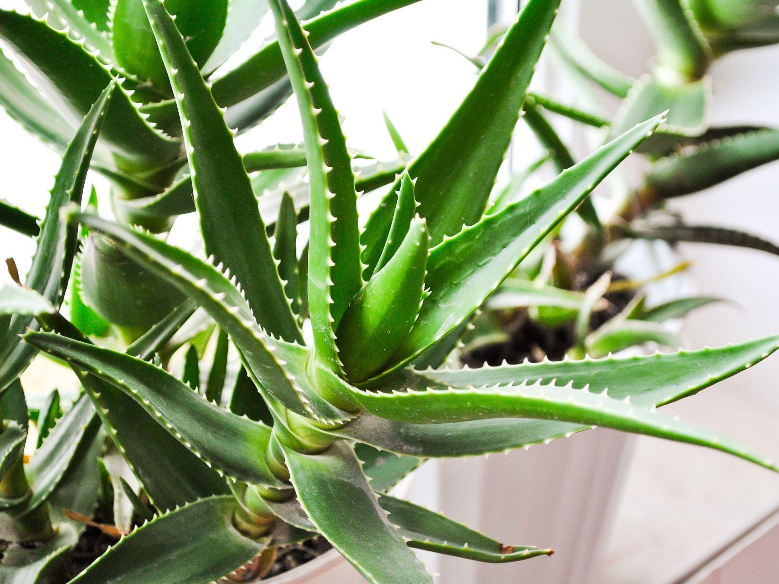 Τα φυτά που είναι… βόμβες οξυγόνου