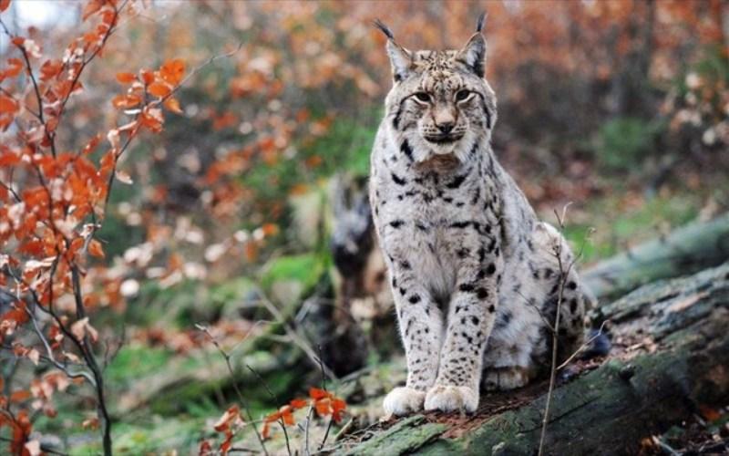 Αγγίζουν τις 23.000 τα απειλούμενα είδη