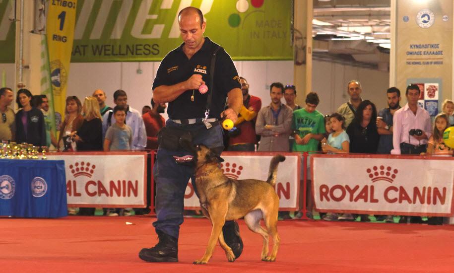 Διήμερο International Dog Festival στη Θεσσαλονίκη