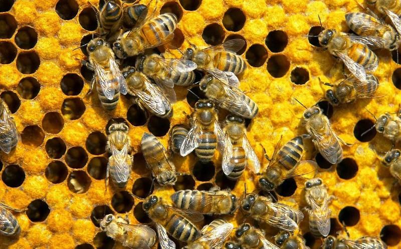 Δηλητήριο σε 115 κυψέλες στην Κέα