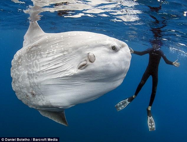 Ψάρια έχετε δει πολλά αλλά... τέτοιο ψάρι σίγουρα όχι!