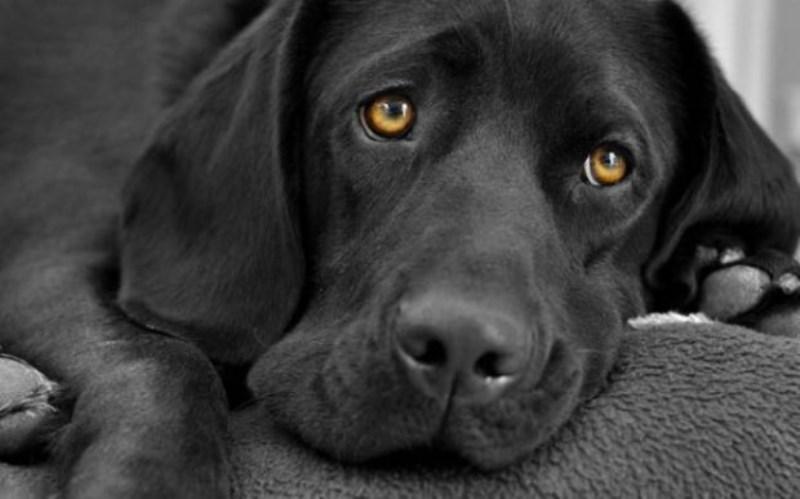 Σύρος: Πυροβόλησε και έβαλε σε σακούλα αδέσποτο σκυλί