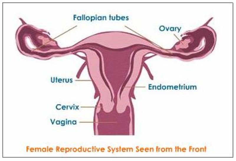 Γυναικολογικές εξετάσεις