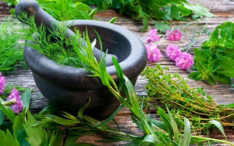 Γυναικολογικές παθήσεις και τα βότανα του Ιπποκράτη