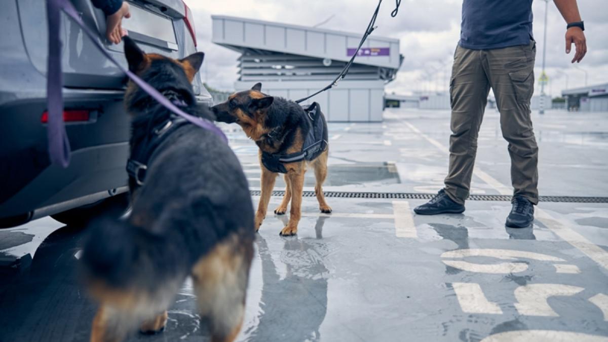 Κορωνοϊός: Σκύλοι εκπαιδεύονται για να ανιχνεύουν τον ιό-Πώς αντιδρούν όταν εντοπίζουν κρούσμα