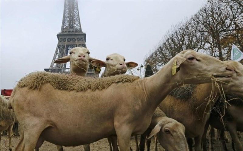 Βοσκοί διαδήλωσαν με τα πρόβατά τους στο Παρίσι