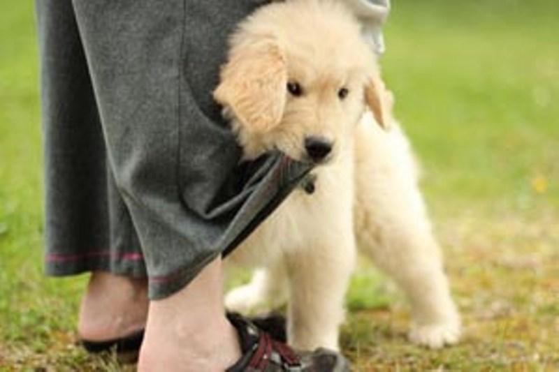 Τα σκυλιά ζηλεύουν πράγματι το αφεντικό τους