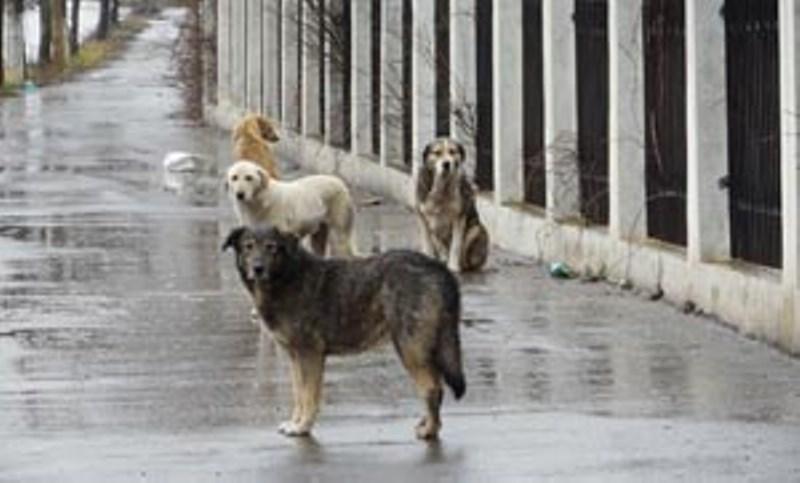 Φέτος τον χειμώνα βοήθησε τα αδέσποτα ζώα της γειτονιάς σου