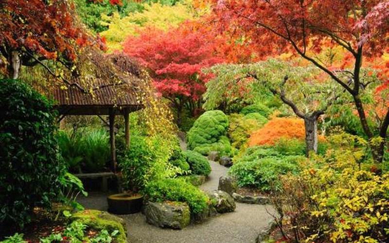Το εκπληκτικό φαινόμενο των φυτών που τραγουδούν
