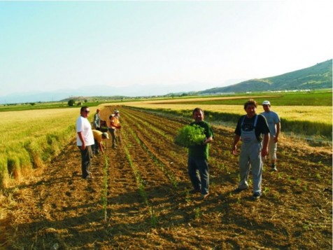 Φοροκαταιγίδα με μεγάλους χαμένους τους αγρότες και όσους εντάχθηκαν στις 100 δόσεις