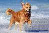 Δημιουργούνται Pet Friendly παραλίες σε όλη τη χώρα