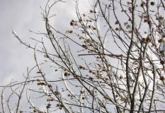 Επιμένουν τα καιρικά φαινόμενα - Νέο δελτίο επιδείνωσης καιρού από την ΕΜΥ -  Χιόνια και θυελλώδεις άνεμοι