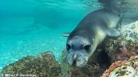 Γυάρος: Το πρώτο θαλάσσιο καταφύγιο άγριας ζωής