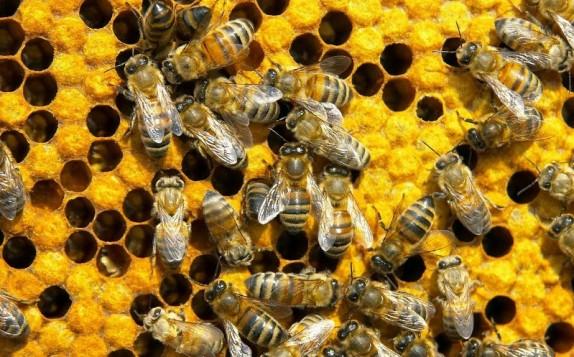 Διεθνές συμπόσιο μελισσοκομίας στη Σύρο και σε 7 νησιά την Πέμπτη 9 Οκτωβρίου